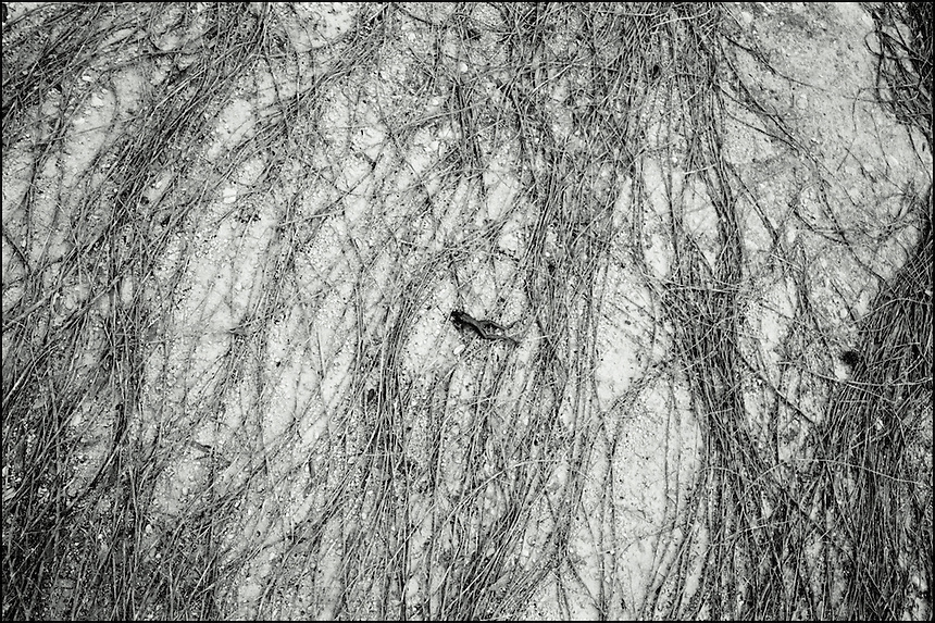 """The swimmer<br /> From """"The other wind"""" series. Gainesville, FL, 2009"""