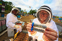At Bob Harvey's apiary in West Palm Beach, Florida, the team of scientists from the Pennsylvania Department of Agriculture carries out a sampling of bees and larvae and installs the measuring instruments for monitoring thermal and hydrometric variations inside the 12 hives and exterior variations during the journey. 12 control hives remain in FL.<br /> Jeff Pettis holds in his hand samplings from the bees.