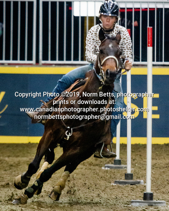 The rodeo at The Royal Agricultural Winter Fair in Toronto Ontario, Ontario, Canada <br /> November 10th, 2019<br /> Norm Betts, photog<br /> normbetts@canadianphotographer.com<br /> Norm Betts, copyright©2019<br /> normbettsphotog@gmail.com<br /> 416 460 8743