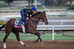 OCT 26 2014:Flying Tipat, trained by Dale Romans, exercises in preparation for the Breeders' Cup Juvennile Fillies Turf at Santa Anita Race Course in Arcadia, California on October 26, 2014. Kazushi Ishida/ESW/CSM