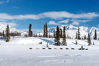 Robert Redington comes down a hill and onto Puntilla Lake just prior to arriving at the Rainy Pass checkpoint during the 2018 Iditarod race on Monday March 05, 2018. <br /> <br /> Photo by Jeff Schultz/SchultzPhoto.com  (C) 2018  ALL RIGHTS RESERVED