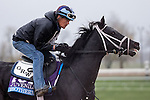 October 28, 2015:  Isotherm, trained by George Weaver and owned by Matthew Schera, exercises in preparation for the Breeders' Cup Juvenile Turf at Keeneland Race Track in Lexington, Kentucky on October 28, 2015. Jon Durr/ESW/CSM