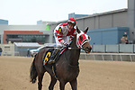 February 17, 2020: Whoa Nellie (6) with jockey Joseph Rocco Jr. aboard after the Bayakoa Stakes at Oaklawn Racing Casino Resort in Hot Springs, Arkansas on Feburary 17, 2020. Justin Manning/Eclipse Sportswire/CSM\