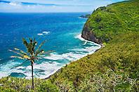 coconut palm trees and Pololu Beach, Pololu Valley, North Kohala, Big Island, Hawaii, Pacific Ocean