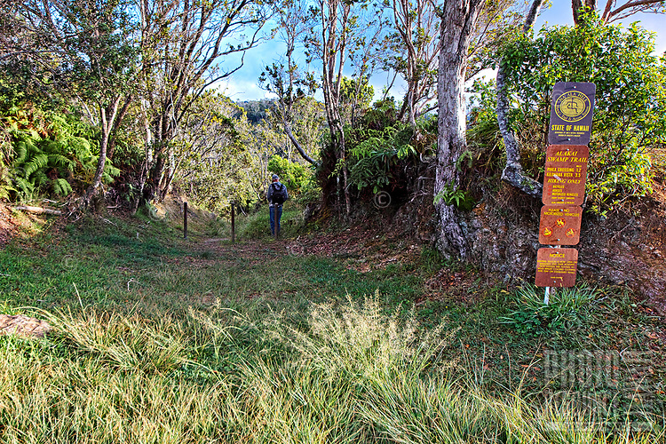 A hiker pauses at the trailhead for the Alaka'i Swamp Trail, the start of a 3.5 mile hike that intersects with the Pihea Trail and ends at the Kilohana Lookout, Kaua'i.