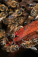 Propolis is a very odorous sticky paste bees use to seal the hive. A thin layer of it also covers the combs of the hive. Propolis is responsible for the smell of wax.