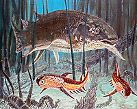 illustration of Dipterus and Climatius, an acanthodian fish, the first fossil lungfish to be studied, this 10 cm long form had cranial rids, in the foreground swims Acanthodian, Mid Devonian, prehistoric marine life