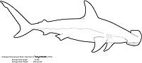 Scalloped hammerhead shark, Sphyrna lewini, illustration by the artist Wyland