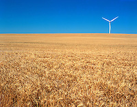 A lone wind generator methodically turns due to the perpetual winds as it sits at the top of a slight rise in a vast wheat field of the Great Plains.  These isolated elements represent two of our greatest energy resources of our country, food and wind.