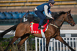 DEC 11,2015: Free Eagle ,trained by Dermot Weld,exercises in preparation for the Hong Kong Cup at Sha Tin in New Territories,Hong Kong. Kazushi Ishida/ESW/CSM