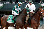 LEXINGTON, KY - October 8, 2017. #1 Martini Glass and jockey Paco Lopez before finishing 2nd in the Juddmonte Spinster Grade 1 $500,000 at Keeneland Race Course, where they finished 2nd, but were moved to 3rd per objection.  Lexington, Kentucky. (Photo by Candice Chavez/Eclipse Sportswire/Getty Images)