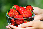 Strawberries, Strawberry, Fruit, Hand, Bowl, Schüssel, Gesundheit, Health, Vitamine, Vitamins