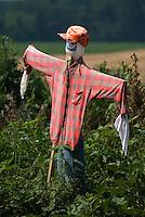 A scarecrow stands in a garden near a soybean field on a farm near St. Mary's. Ohio<br />