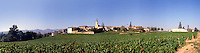 Vineyard in Beaujolais region of France