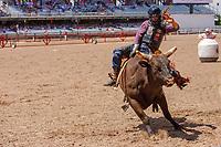 Eli Vastbinder, Athens,TX, ride the bull Chorin One at 2017 Cheyenne Frontyer days