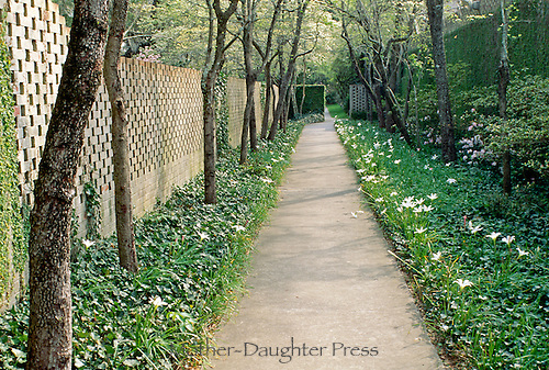 Hidden tree lined pathway in spring with blooming snowdrops in ivy