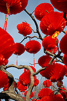 CHINA. Lanterns hanging in a tree during Chinese New Year in Ditan Park in Beijing.  Chinese New Year, or Spring Festival, is the most important festival and holiday in the Chinese calendar In mainland China, many people use this holiday to visit family and friends and also visit local temples to offer prayers to their ancestors. The roots of Chinese New Year lie in combined influences from Buddhism, Taoism, Confucianism, and folk religions.  2008.