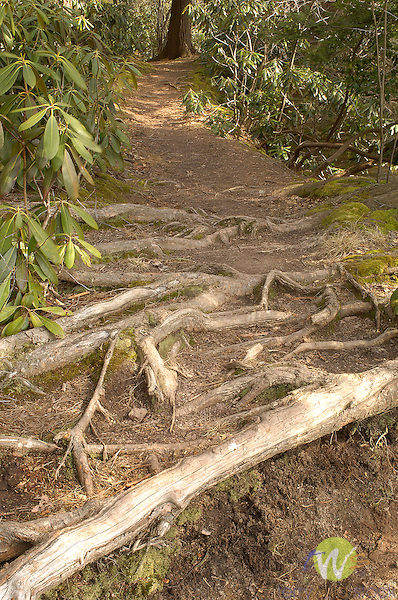 Eagles Mere lake path
