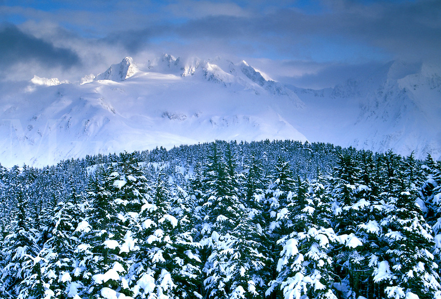 Fresh snowfall in the Chugach National Forest, Alask
