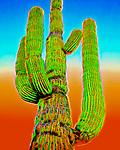 Saguaro #40