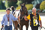 May 17, 2014. Ria Antonia, the lone filly in the Preakness field, heads to the track to be saddled. California Chrome, Victor Espinoza up, wins the 139th Preakness Stakes at Pimlico Race Course in Baltimore, MD. ©Joan Fairman Kanes/ESW/CSM