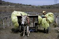 sisal, Yucatan,<br /> Mexique<br /> <br /> (date inconnue)<br /> <br /> PHOTO : Michel Faugere Publiphoto- Agence Quebec Presse