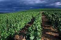 Europe/France/Rhône-Alpes/69/Rhône/Env Ternand: Vignoble du Beaujolais