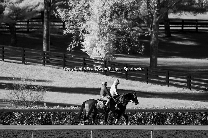 November 6, 2020: A horse backtracks on the track before Future Stars Friday racing begins at Keeneland Racetrack in Lexington, Kentucky, on Friday, November 6, 2020. Scott Serio/Eclipse Sportswire/Breeders Cup/CSM