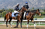 ARCADIA, CA FEBRUARY 6:  #3 Moonlight D'Oro, ridden by Flavien Prat, in the post parade of the Las Virgenes Stakes (Grade lll) on February 6, 2021 at Santa Anita Park in Arcadia, CA.  (Photo by Casey Phillips/EclipseSportswire/CSM)