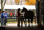 10  November  2009 Fasig TIpton November Breeding Stock sale. Hip #28 Temperence Gift, consigned by Brandywine Farm being prepared for a final showing only minutes before the start of the Fasig Tipton November Breeding Stock sale.
