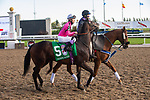 September 19, 2020: #5 Value Proposition (GB), ridden by Daisuke Fukumoto and trained by Mark Casse heads to the post for the Grade 1 Ricoh Woodbine Mile at Woodbine Racetrack in Toronto, Ontario, Canada.
