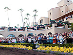 Fans cheer for Zenyatta in the Paddock before she marks her 18th victory, winning the Clement L. Hirsch Stakes at Del Mar Thorobred Club, Del Mar, CA