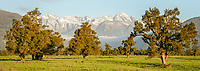 Farmland in Whataroa with Southern Alps background close to sunset, South Westland, West Coast, New Zealand, NZ