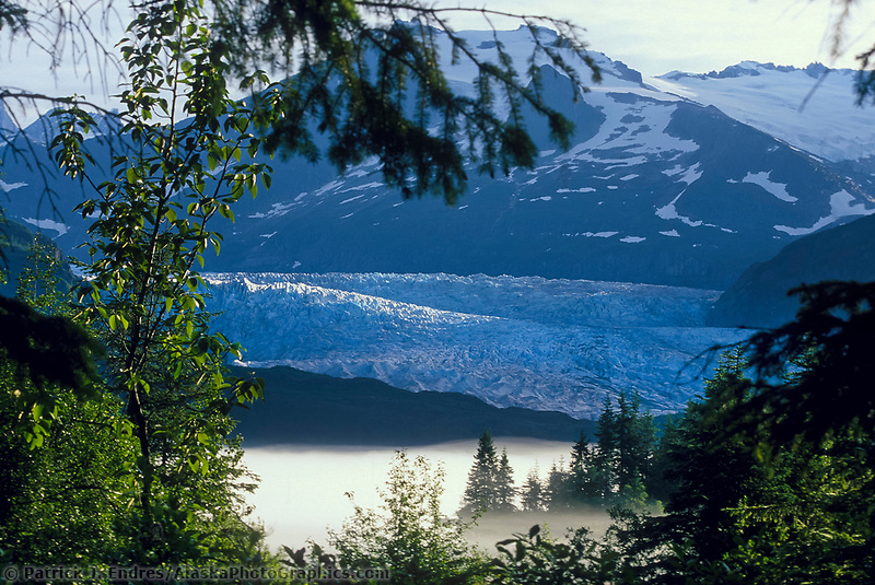 Mendenhall Glacier terminus, Juneau, Alaska. The Mendenhall Glacier formed about 3,000 years ago. Since 1767 it has receded 2.5 miles. Currently, the glacier is 12 miles long and terminates in Mendenhall Lake.