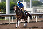 SHA TIN,HONG KONG-APRIL 29: Dicton,trained by Gianluca Bietolini,prepares for  the Audemars Piguet QEII Cup at Sha Tin Racecourse on April 29,2017 in Sha Tin,New Territories,Hong Kong (Photo by Kaz Ishida/Eclipse Sportswire/Getty Images)