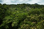 Semi-deciduous tropical moist rainforest canopy, Panama Rainforest Discovery Center, Gamboa, Panama