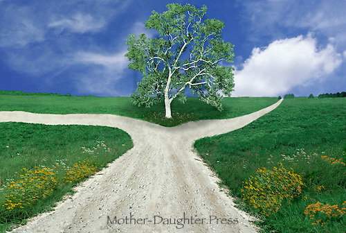 Sycamore tree at split of country road into two forks parting ways