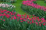 Netherlands, Keukenhof Gardens.  <br /> Try to match your subject to the lighting conditions. Overcast skies like this produce a diffuse, low contrast light, without shadows. This soft light yields detail and color saturation. Flowers, close-ups, forests and streams are often best photographed on cloudy days. <br /> Tulips at Keukenhof Gardens near Lisse.