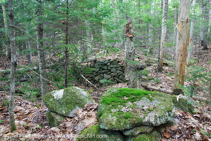 The Andrew Munsey Place home site cellar hole along Sandwich Notch Road in Sandwich, New Hampshire. During the early nineteenth century a hill farm community occupied the Notch. By the turn of the twentieth century only one person lived in the Notch year around.