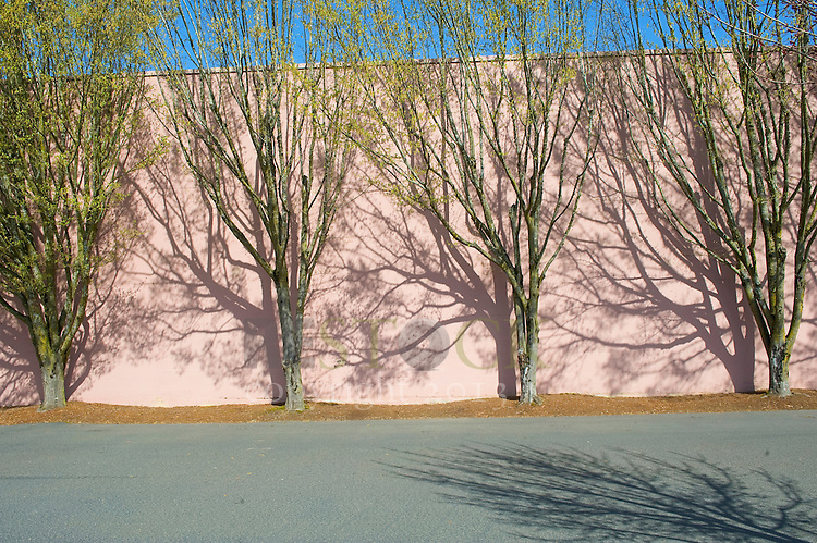 Pink Wall with Trees
