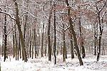 Europa, DEU, Deutschland, Nordrhein Westfalen, NRW, Ruhrgebiet, Muelheim, Wald, Waldgebiet Uhlenhorst, Buchen, Buchenwald, Schnee, Winter, Kategorien und Themen, Natur, Umwelt, Landschaft, Jahreszeiten, Stimmungen, Landschaftsfotografie, Landschaften, Landschaftsphoto, Landschaftsphotographie, ....[Fuer die Nutzung gelten die jeweils gueltigen Allgemeinen Liefer-und Geschaeftsbedingungen. Nutzung nur gegen Verwendungsmeldung und Nachweis. Download der AGB unter http://www.image-box.com oder werden auf Anfrage zugesendet. Freigabe ist vorher erforderlich. Jede Nutzung des Fotos ist honorarpflichtig gemaess derzeit gueltiger MFM Liste - Kontakt, Uwe Schmid-Fotografie, Duisburg, Tel. (+49).2065.677997, ..archiv@image-box.com, www.image-box.com]