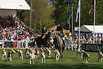 Badminton Horse Trials Gloucestershire UK. The Parade of Hounds in the Main arena.