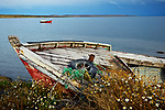 Abandoned woden fishing boat and wildflowers. Puerto Natales, southern Chile, South America