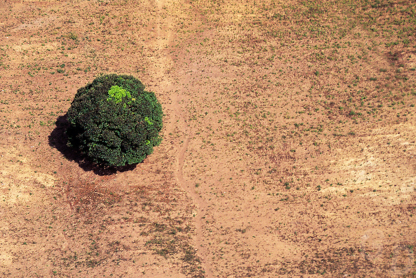 Environment - Just A single Tree - Philippines