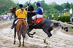 BALTIMORE, MD - MAY 21: Big Louie D #7, ridden by Joshua Navarro, leaps off the ground during the post parade before the Chick Lang Stakes at Pimlico Race Course on May 21, 2016 in Baltimore, Maryland. (Photo by Amy K. Dragoo/Eclipse Sportswire/Getty Images)