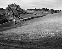 """Tuscan Tree""<br />