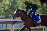 SHA TIN,HONG KONG-DECEMBER 09: Cougar Mountain,trained by Aidan O'Brien,exercises in preparation for the Hong Kong Mile at Sha Tin Racecourse on December 9,2016 in Sha Tin,New Territories,Hong Kong (Photo by Kaz Ishida/Eclipse Sportswire/Getty Images)