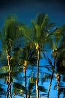 Reflective Palm Trees