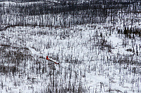 Meredith Mapes runs in the Farewell Burn area between Rohn and Nikolai during the 2018 Iditarod race on Tuesday afternoon March 06, 2018. <br /> <br /> Photo by Jeff Schultz/SchultzPhoto.com  (C) 2018  ALL RIGHTS RESERVED