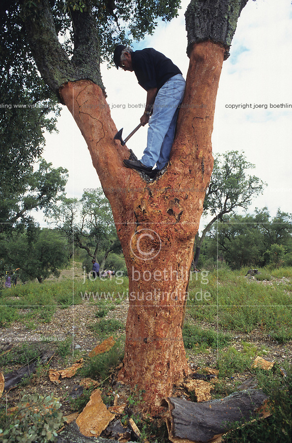 PORTUGAL, Alentejo, worker peel the bark of cork tree, every 7 years the bark of a tree can removed for production of cork stopper and flooring products / PORTUGAL, Alentejo, Landarbeiter bei Schaelung von Korkeichen, alle 7 Jahre kann die Rinde deer Korkeiche geschaelt werden, aus der Korkrinde werden Flaschenkorken und Fussbodenbelege hergestellt